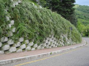realizzare un muro verde: riverdimento